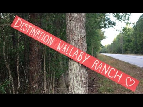 The Wallaby Ranch Experience