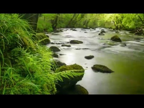 What is Ancient Woodland? | Woodland Trust