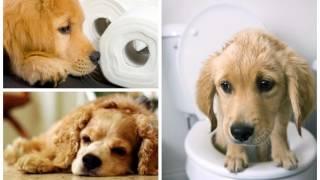У собаки запор что делать?