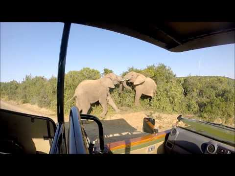 Honeymoon Safari at Shamwari game reserve South Africa