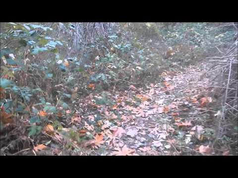 Exploring hidden waterfalls in the San Bernardino National Forest
