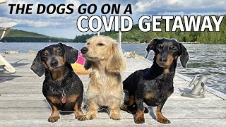 Ep#5: The Dogs Go to the Cottage for a COVID GETAWAY!