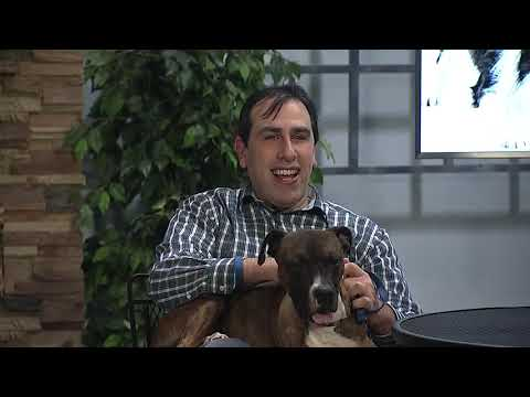 Adopt Freddie From The Buffalo Animal Shelter