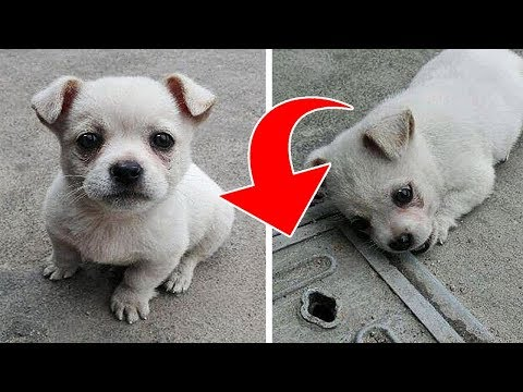 A Puppy Didn't Want to Move Away From This Manhole. Then Its Owner Found Out Something Heartbreaking