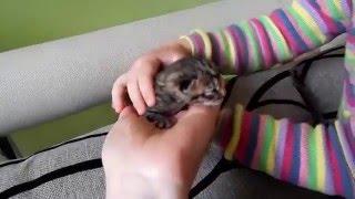 Новорожденный котенок! Котенок родился! Смешные котята - животные для детей!