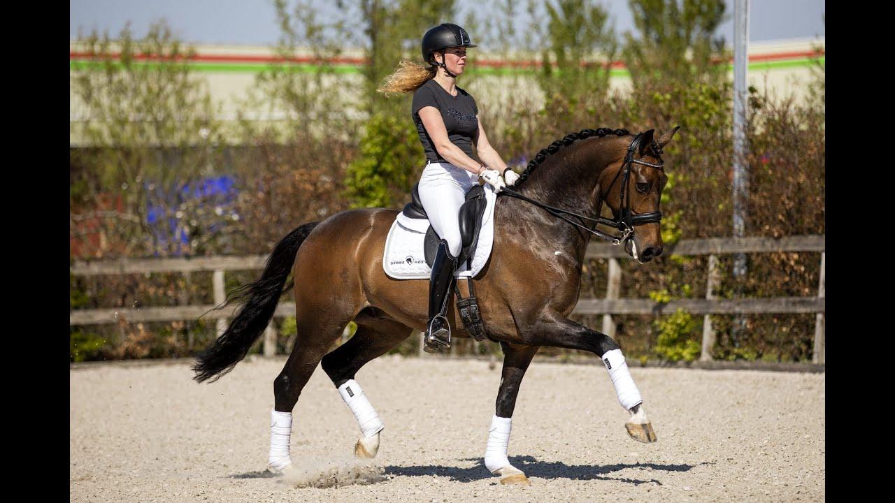 Charlotte Heering trouve une nouvelle relève aux Pays-Bas