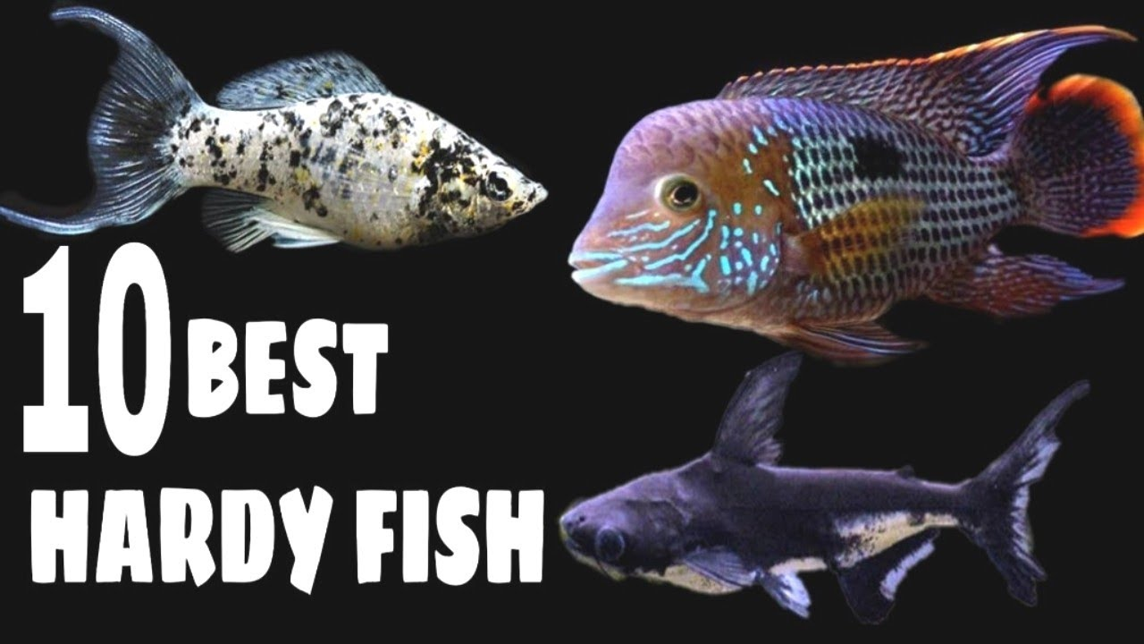what are the hardiest tropical fish