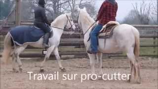 Stage Tri de Bétail - Florence Volcler et Xisto - Mars 2015 - Ecurie Richard Lledo