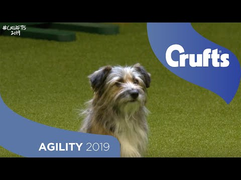 Agility Kennel Club British Open Final Part 1 - Small and Medium | Crufts 2019