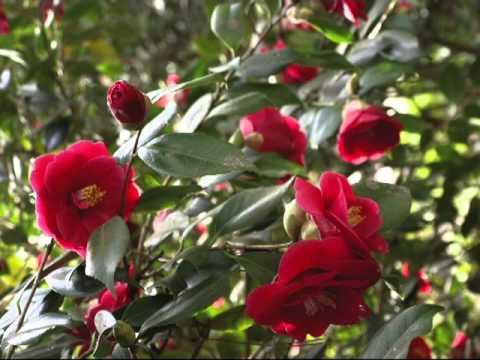 Mon Film Le Parc Floral