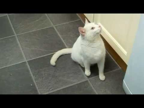 Ssscat r pulsif pour chat kit19005 youtube for Repulsif chat interieur