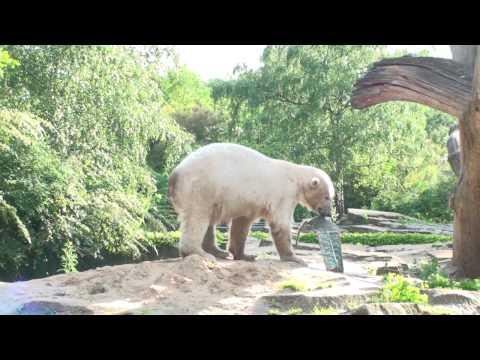 Knut, the Berlin Polar Bear