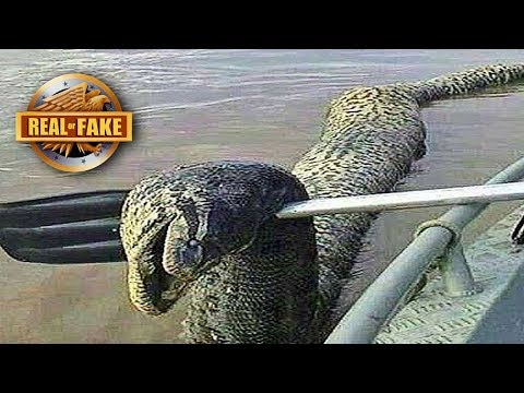 UNIDENTIFIED RIVER MONSTER - Real or Fake