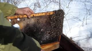 Осмотр пчёл после выноса из зимовника. Дача лечебной подкормки.Обзор авто для пчеловода