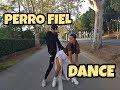 Perro Fiel By SHAKIRA Ft Nicky Jam DANCE VIDEO mp3