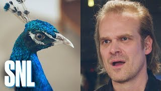 David Harbour Has to Share His SNL Dressing Room with the NBC Peacock