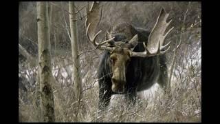 #23 - The Challenge Bull Moose by Robert Bateman