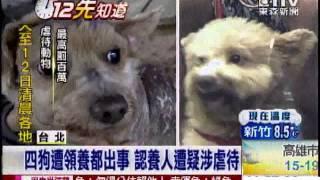 台北市一位楊姓男子,從前年開始領養了4隻狗,網友稱讚他好有愛心,簡直...