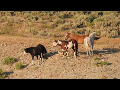 Wild horses at Sand Wash Basin Colorado Summer 2019