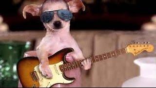 funny pet videos: Puppy dancing