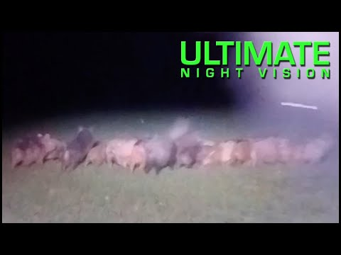 Hunting Hogs Texas Style