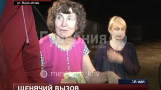 В Хабаровске ищут хозяев для спасенных щенков. MestoproTV