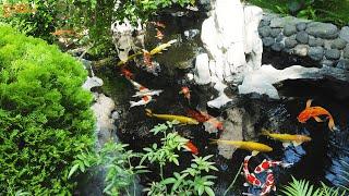 DIY Beautiful Outdoor Koi Aquarium