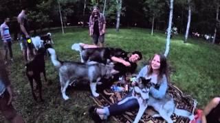 Пикник северных ездовых собак, супер