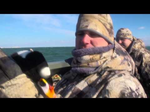 Maryland Sea Ducks