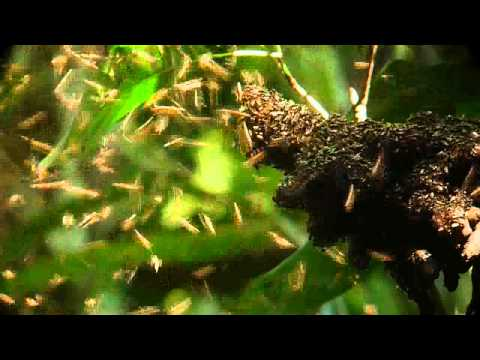 Stingless Bees in the Yasuni