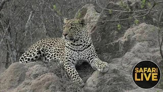 safariLIVE - Sunset Safari - November 18, 2018