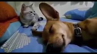 Cat Smacks Dog Out Of Sleep For Farting in His Presence!