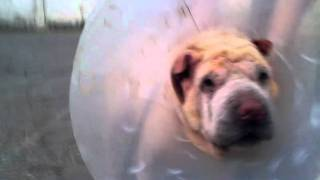 Bonnie (28.09.2011) - Adopt Her!