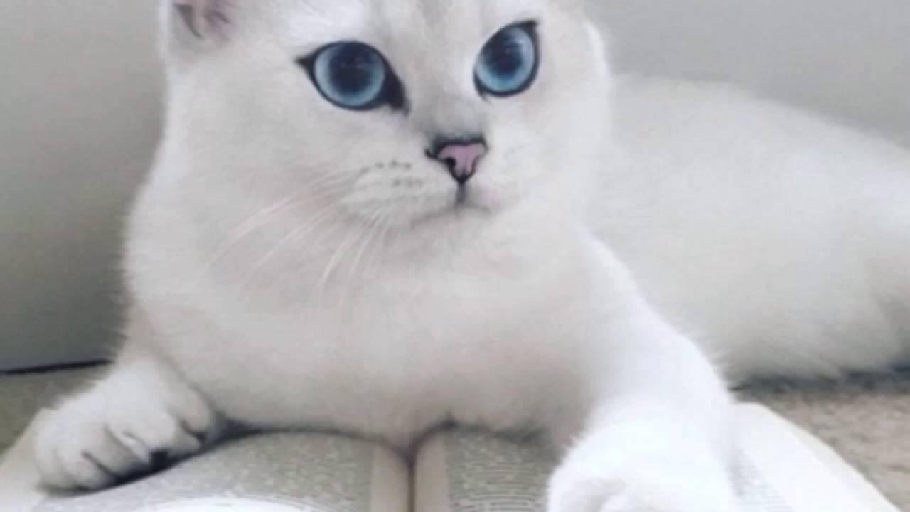 коби коты фото