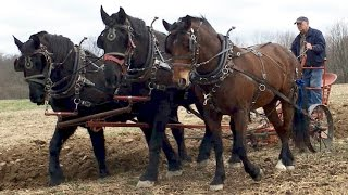 Horse Plowing With Farmer Bob