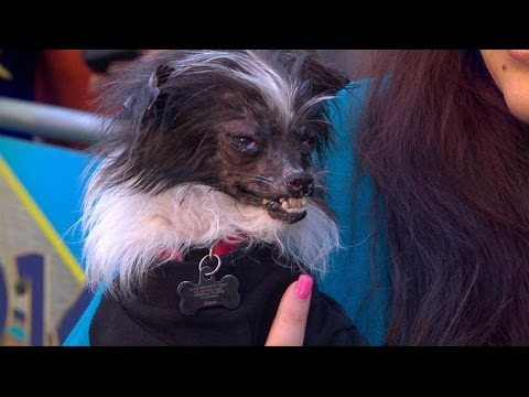 Rescued Dog Wins 26th Annual World S Ugliest Dog