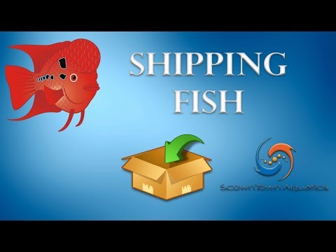 """Packaging and Shipping to """"The Fish Guy"""""""
