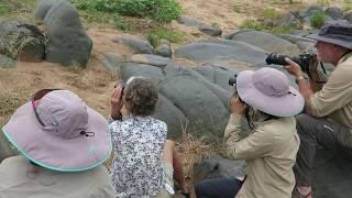 Spirited Adventures - Love Elephant On Foot