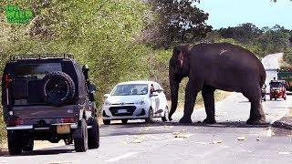 lephant rescue video youtube