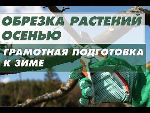 Как правильно обрезать деревья осенью ?