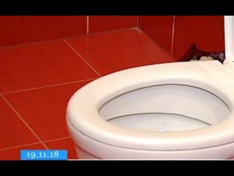 ТРК ВіККА: Золоті шкільні унітази й вимушені «інтимні» бесіди: казуси з черкаськими вбиральнями