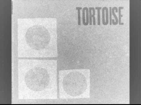TORTOISE - Onions wrapped in rubber