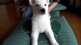 我が家で生まれた仔犬.