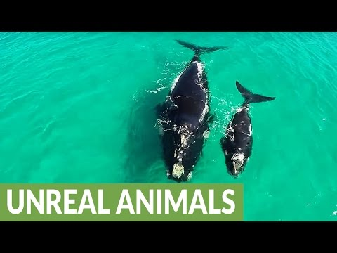 Whale Nursery At Fitzgerald National Park In Western Australia