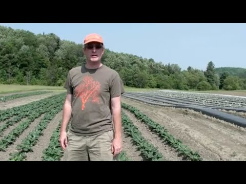 Seed Production Fields at High Mowing Organic Seeds