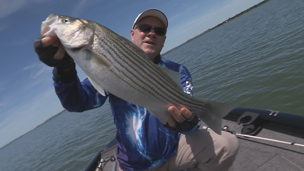 Striper fishing texas