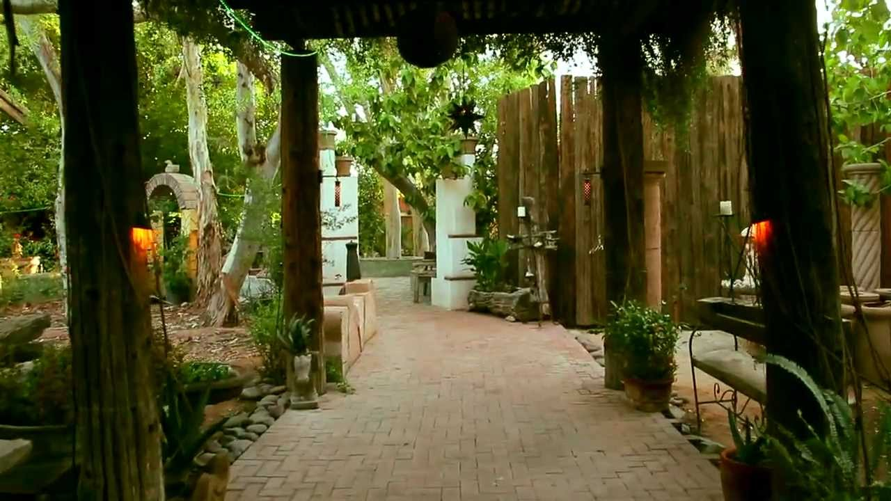 Boojum Tree HIdden Gardens Phoenix Arizona   YouTube