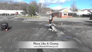 Husky's Before/after Video!  Check Out This Wild Girl's Video! Husky Training In Northern Virginia