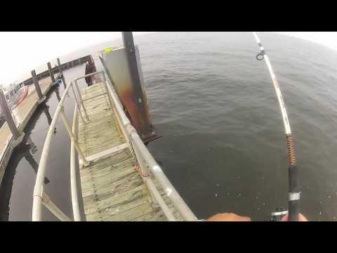 Fluke Fishing At Sandy Hook New Jersey 8-3-2012