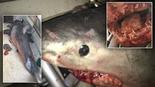 73-Year-Old Man Survives After 9-Foot-Long Great White Shark Jumps Onto His Boat